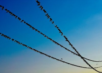 Golondrina / swalow, Spain.