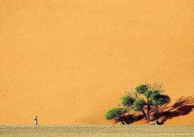 Dune 45, Namib dessert, Namibia.