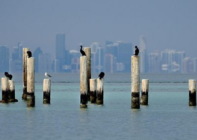 Cormoran, Miami, USA.