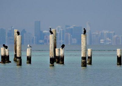 Cormoran, Miami, USA.