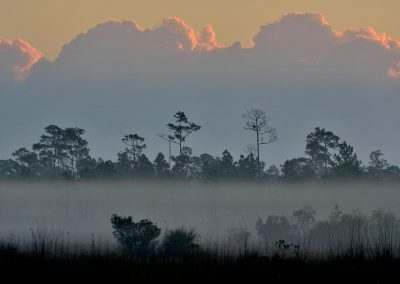 Landscape, Everglades National Park, Florida, USA.