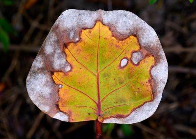 Metamorfosis otoñal / Autumn metamorphosis, Florida, Spain.