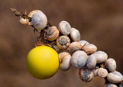 Caracol / snail, Tarifa, Spain.