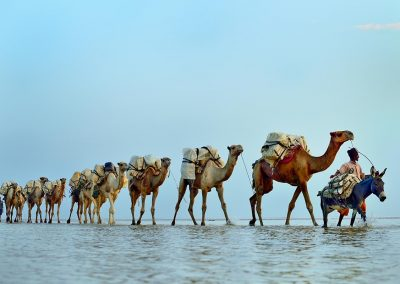 Caravana de la sal / Caravan of salt, Essale lake, Ethiopia.