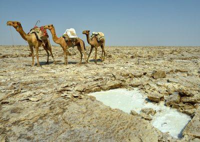 Extracción de sal / extraction of salt Danakil, Ethiopia.