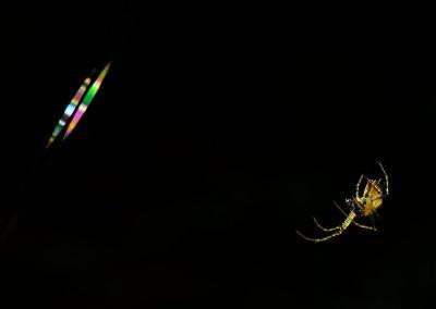 Araña / spider, Spain.