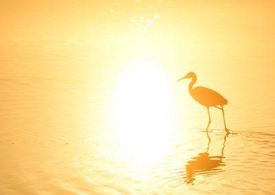 Silueta de garza / heron silhouette, Everglades National Park, Florida, USA.