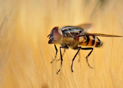 Mosca / fly, Parque del Sureste, Spain.