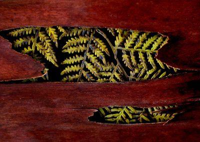 Helechos y y corteza de eucalipto / ferns and bark of eucalyptus., Australia.