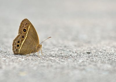 Mariposa / butterfly, Southeast China.