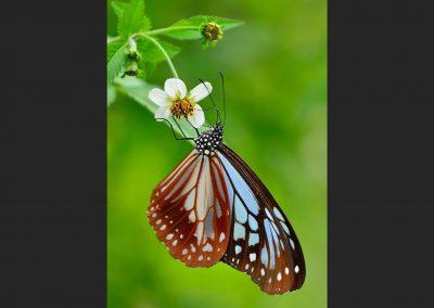 Mariposa / butterfly, Southeast China.