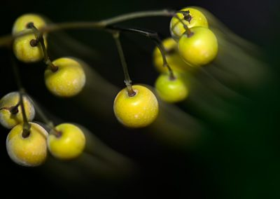 Frutos / fruits, Sierra Cazorla, Spain.