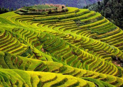 Terrazas de arroz / Rice terraces, Longsheng, Southeast China,