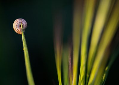 Caracol / snail, Spain.