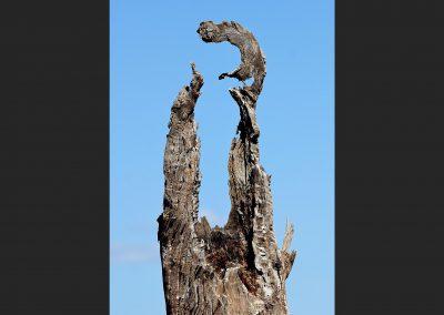 Arbol seco / dry tree, Victoria, Australia.