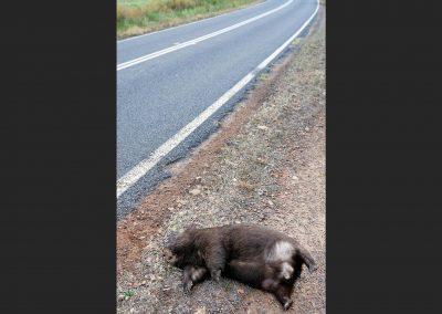 Wombat, Victoria, Australia.