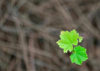 Hoja / leaf, Mallorca, Spain.