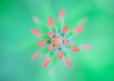 Flor / flower, Mingo, Ecuador.