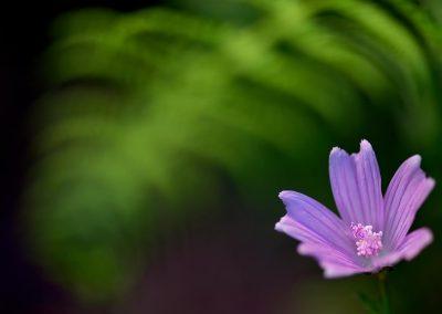 Flor / flower, Miraflores, Spain.