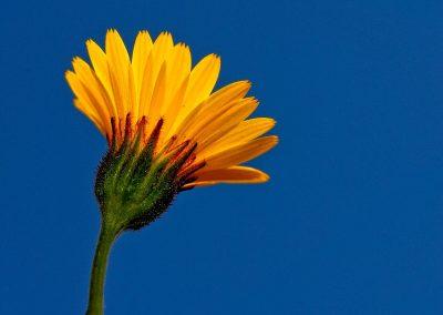 Flor / flower, Extremadura, Spain.