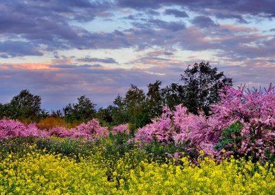 Flora Parque del Sureste, Madrid.
