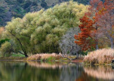 Flora lacustre, New Zealand.
