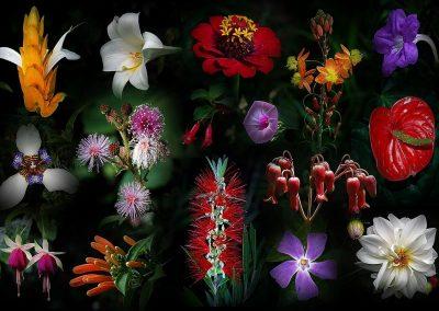 Flores / flowers, Guatemala.