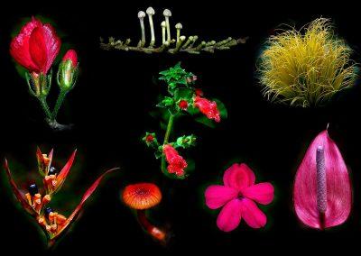 Flores / flowers. Costa Rica.