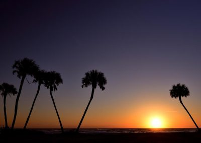 Beach palms. Florida. USA.