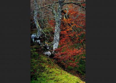 Parque Nacional Ordesa, Spain.