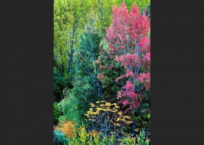 Bosque en otoño, autumn forest, Sierra Albarracin, Spain.