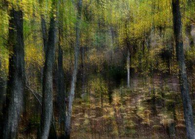 Bosque de El Tiemblo / El Tiemblo forest, Spain.
