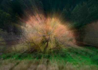 Efecto zoom de arbol / Zoom efect tree, New Zealand.