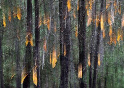 Bosque de El Tiemblo / El Tiemblo forest. Soain.