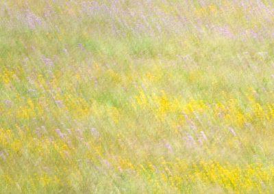 Flores del campo, Extremadura, Spain.