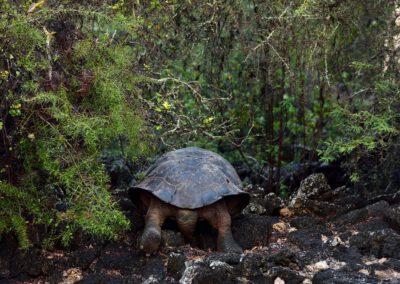 Honourable Mention Remarkable Species, Marenda Nature 2021, France.