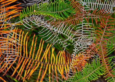 Honourable Mention Botanical, Australian Geographic Nature, 2019